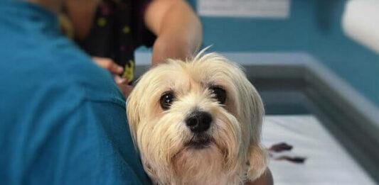 imagem de um cachorro sendo segurado no colo pelo humano