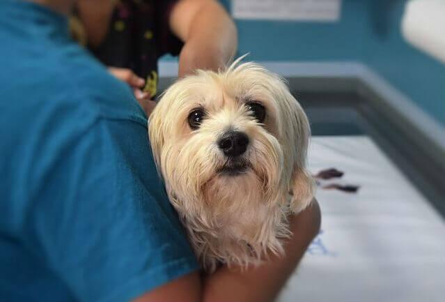 Opções para plano de saúde de cachorro