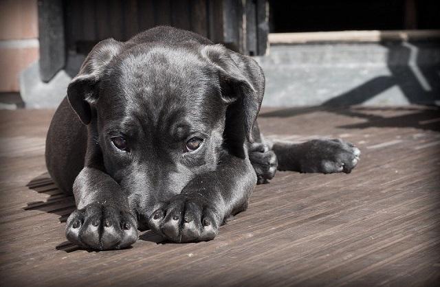 imagem de um cachorro deitado com aparência de cansado