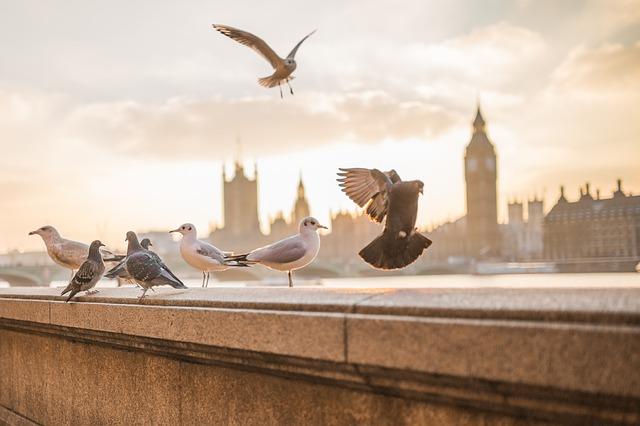 Viajar de carro: Londres