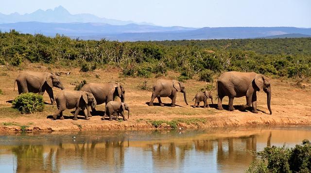 Africa do Sul: destino para conhecer de carro