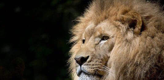 imagem de um leão que representa o Imposto de Renda