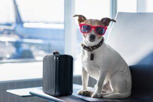 levar cachorro no avião
